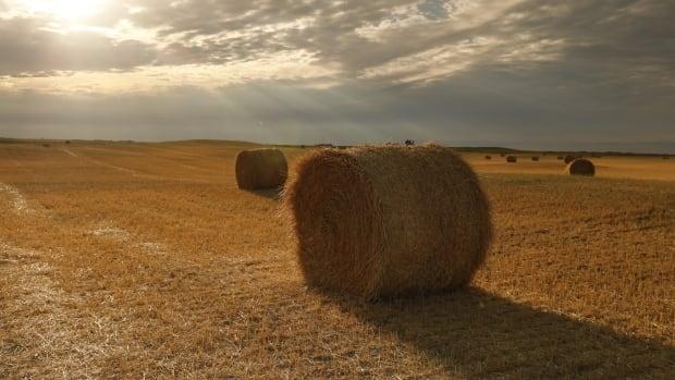 Deniz çiftçileri, kuraklıktan etkilenen Prairies'e fazla saman göndermek için 'elinden geleni yapıyor'