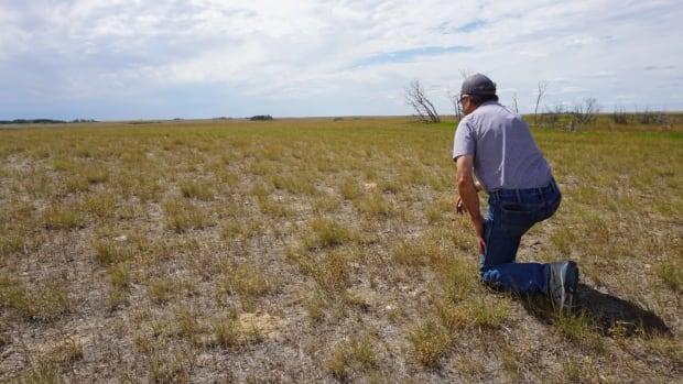 sask. iklim değişikliği kaynaklı ısıyla mücadele için ağaçlar, kış bitkileri kullanan çiftçiler